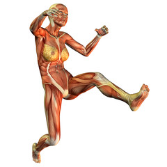 Wall Mural - Muskelaufbau einer springenden Frau