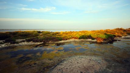 Paesaggio salina Camargue Francia