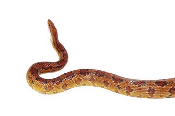 schlange snake 15