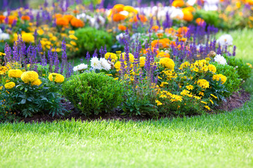 multicolored flowerbed on a lawn Wall mural