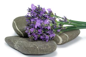 lavendelstrauss auf steinen