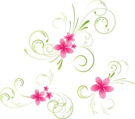 Colorful plumeria floral elements