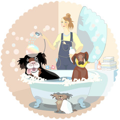 Girl, dogs cleaner, washing couple of dog