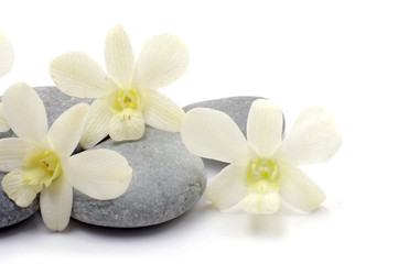 orchid flower with zen stones