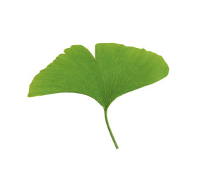One green leaf. Isolated on white background