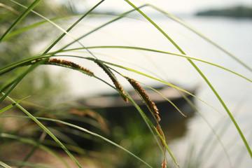 grass&river
