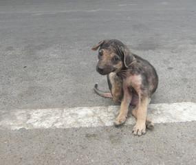Streetdog in Thailand