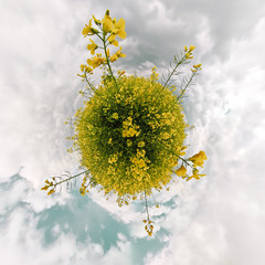 Rapsfeld - little planet