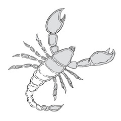Gray Scorpion. Vector illustration