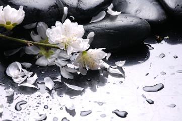 Spa still life and water drops