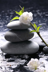 Stacked stones with flower and water drops