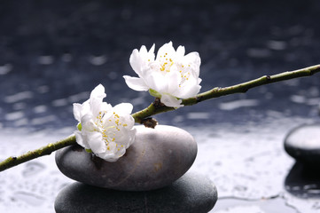 Stacked stones and white flower on water drops