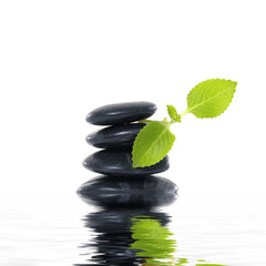 Stack of black stones whit leaf of mint and drops