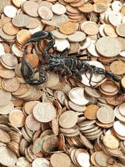 Scorpion with money
