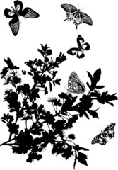 cherry tree flowers and five butterflies