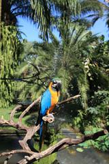 Poster Parrot Parrot