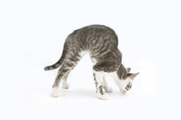 gattino che annusa