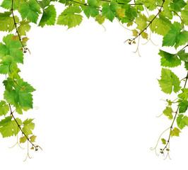Fototapeta Fresh grapevine border on white background obraz