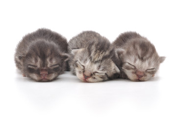 Wall Mural - Kittens Sleeping