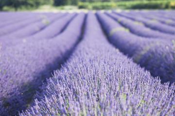 Tuinposter Lavendel champs de lavande