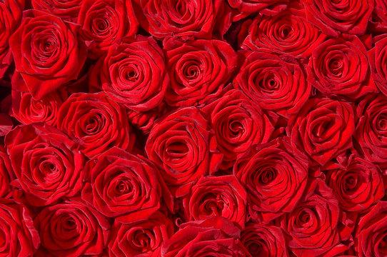 Rote Rosen, Symbol für Liebe, Rosenstrauß