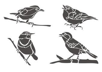 Птицы / Birds