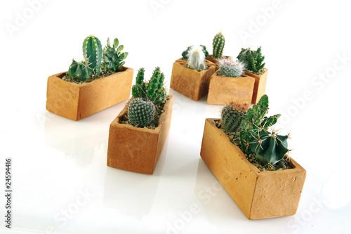cactus mini en pot de terre brune photo libre de droits. Black Bedroom Furniture Sets. Home Design Ideas