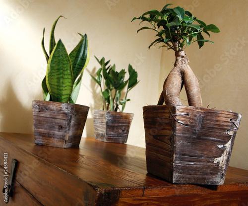 Petites plantes vertes dans pot bois photo libre de for Petites plantes vertes
