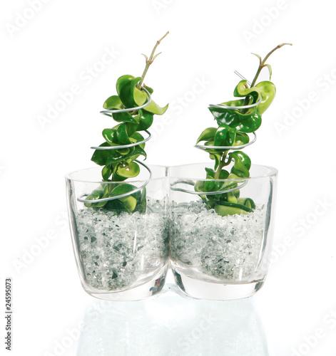 Deux plantes vertes en pots de verre d cor photo libre for Plantes vertes en ligne