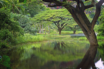 Pond, Trees and Reflections, North Shore, Oahu