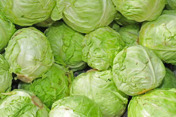 cabbage vegetable in the market