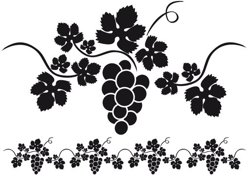 Mano dibujado vector ilustración de las uvas de la rama. Vid bosquejo  aislado sobre fondo blanco — Ilustración de stock in 2020   Hände zeichnen