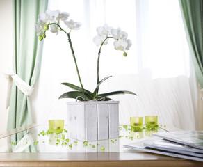 orchidée blanche en pot bois blanc devant fenêtre et rideaux