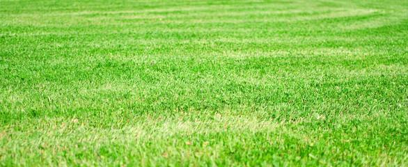 green grass field texture
