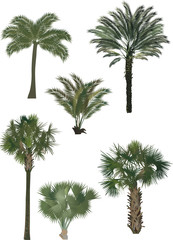 six color palm trees