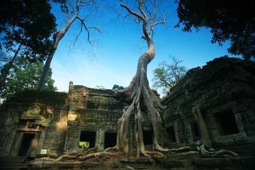 Ta phrom tree, Angkor wat, Siam reap, Cambodia