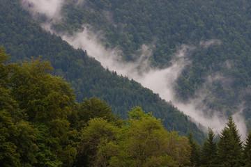 Morgenstimmung Nebel