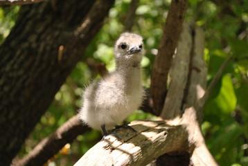 Ile aux oiseaux - Tikehau