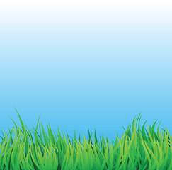 grass field with blue sky