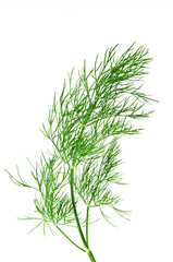 fresh green dill isolated over white