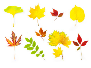 Different Autumn Leaves /  XXLarge size / isolated on white