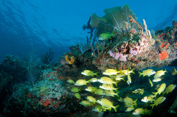 Coral Ledge Composition with fish aggregation