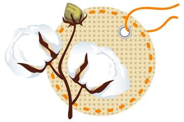 Cotton branch with label (Gossypium)