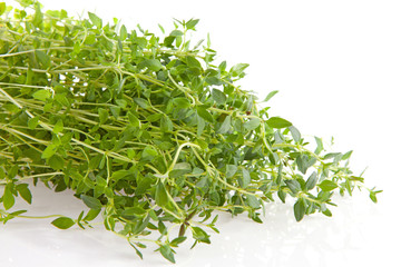 fresh thyme herb in closeup over white background