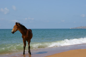 foal on seacoast