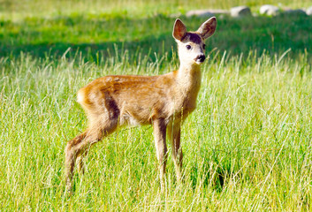 Young cute deer in reservation