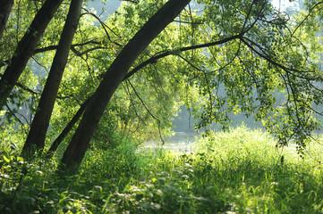 alberi 1075