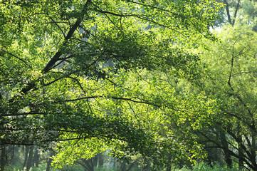 alberi 1083