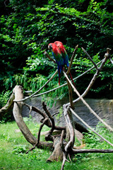 macawsitting on a branch