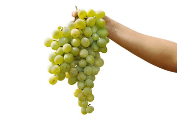 Grapes cluster on a white background
